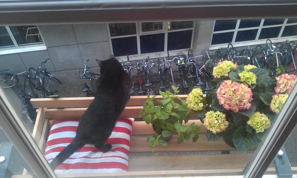 Poes op het balkon